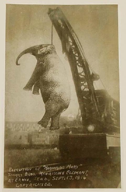 Жесть! Казнь слонов в Америке…вход по билетам! Шокирующее видео