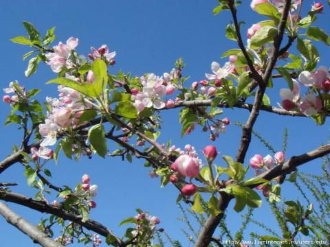 Весна нежна - она в цветах