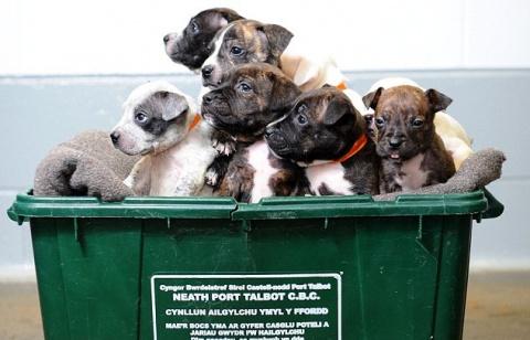 12 щенков выкинули в мусорный бак