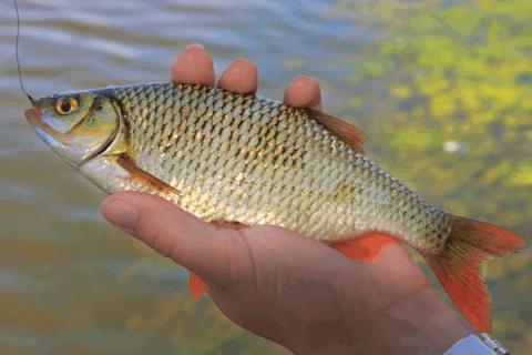 Какую рыбу ловить в апреле