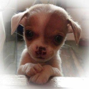 История о щенке,который поверил в людей....