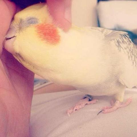 Иногда хочу быть попугаем