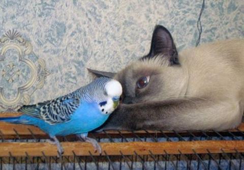 Месть попугая)