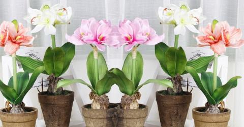 Секрет роскошного цветения комнатных растений