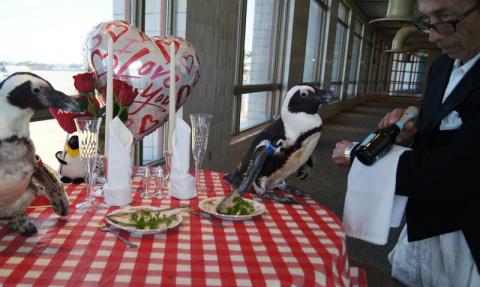 Пара пингвинов отпраздновала свой 22-й День Святого Валентина