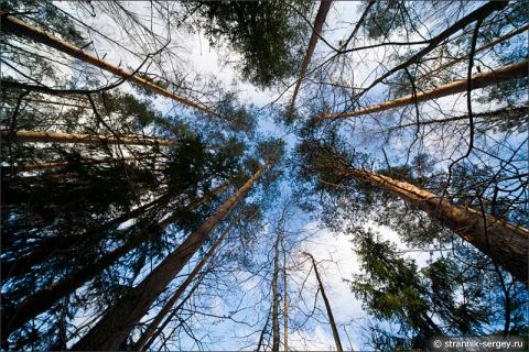 Один день  среди деревьев