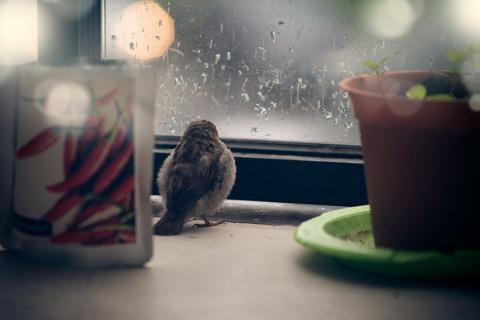 История о птенце воробья и человеческой доброте