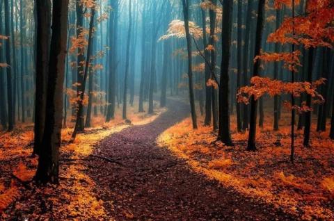 15 мистических лесов, в кото…