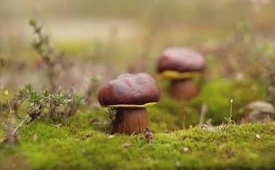 Лесные грибочки своими рукам…