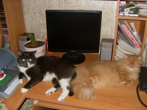 История Перси и Коти