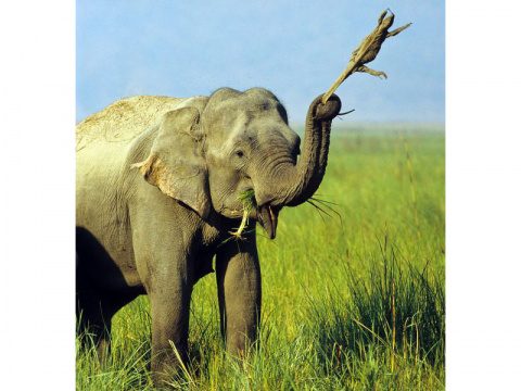 Потрясающие фотографии разборок диких животных