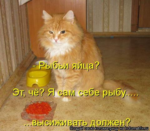 Очень смешные кошки