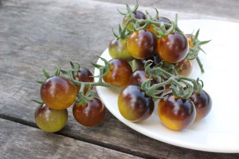 Наши Золотые ягоды