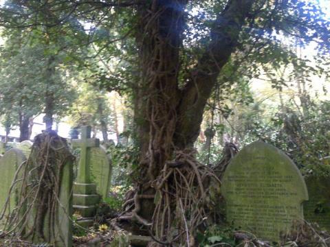 Вампиры Хайгейтского кладбища