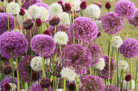 Чудо-шары. Декоративные луки украсят любой цветник