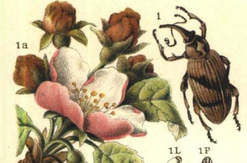 Метод хитрых ловушек. Как в старину боролись с насекомыми-вредителями