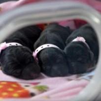 «Фабрика клонирования» в Кит…