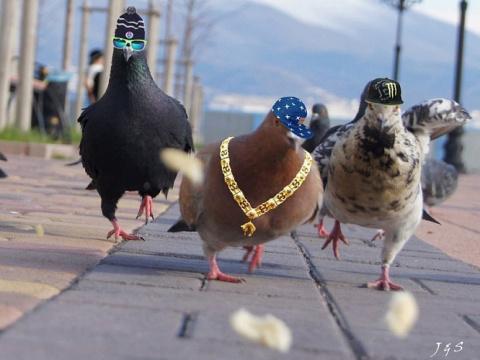 Пенсионер вырастил пять килограммов марихуаны для себя и голубей