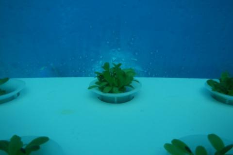 Будущее сельского хозяйства на дне морском