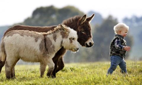 15 очаровательных карликовых осликов, в которых невозможно не влюбиться