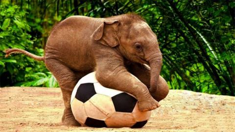 Любвеобильные слонята - милое видео