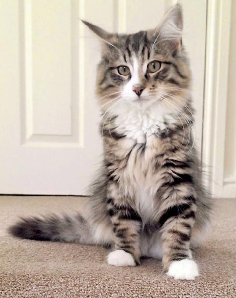 Пропавший кот полтора года п…