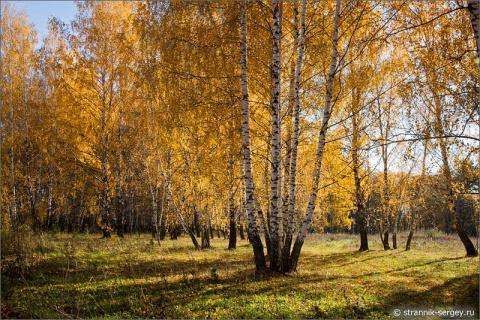 Прощальный вальс деревьев