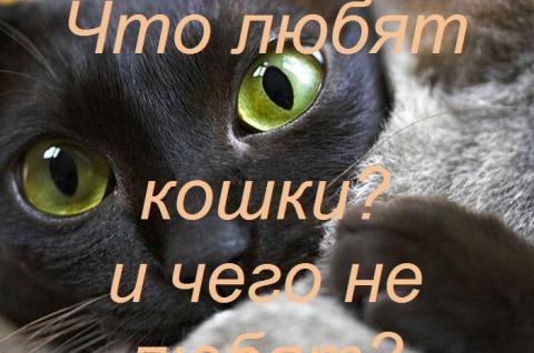 Что любят кошки и чего не любят?