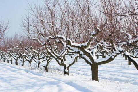 Зимняя миссия садовода - обезвредить вредителей