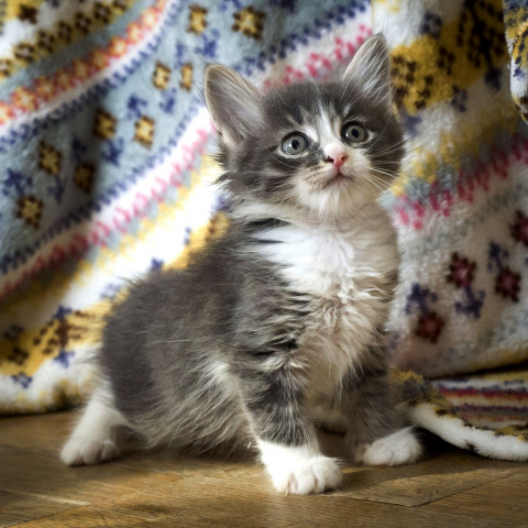 Пятничный котик Шуршик – ком…