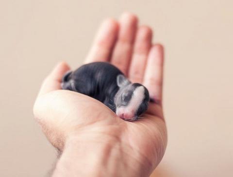 Парень фотографировал своего кролика практически с рождения