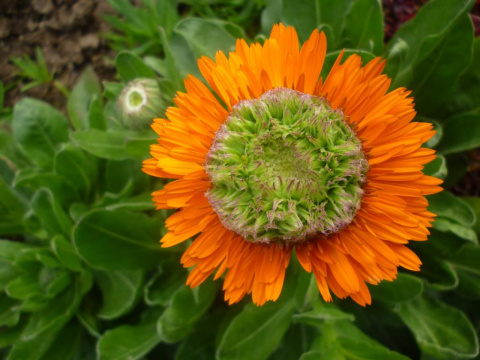 А эти цветы мы посеем под зиму!