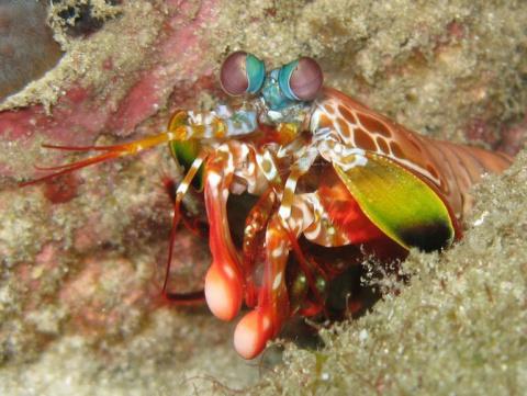 Хрупкая красота: 7 самых живописных коралловых рифов