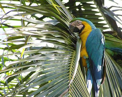 Майами — райский уголок