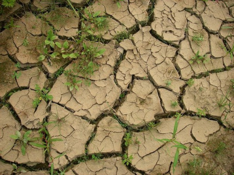 Улучшаем глинистую почву
