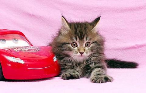 Интересные факты о кошках (5)