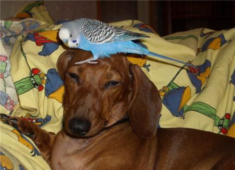 Попугаи и собаки, смешно и забавно!