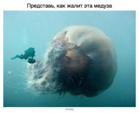 Снимки, после просмотра которых ты в воду ни ногой