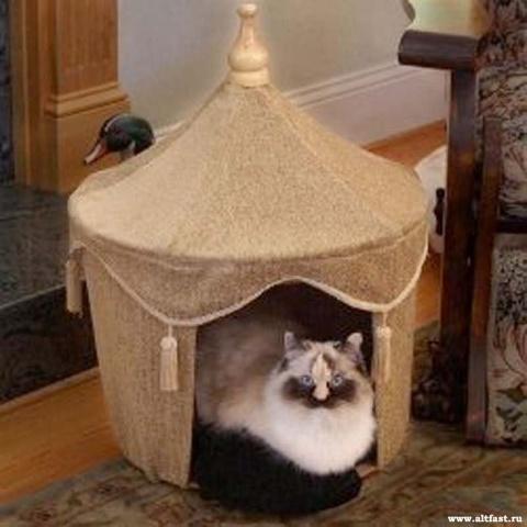 О влиянии котов на омоложени…