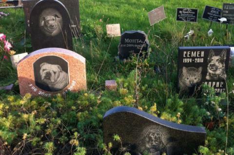 Похороненная вместе с людьми собака возмутила депутата в Артеме