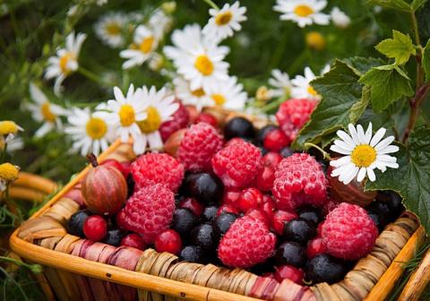 Как повысить урожайность ягодников: хитрости продвинутых садоводов