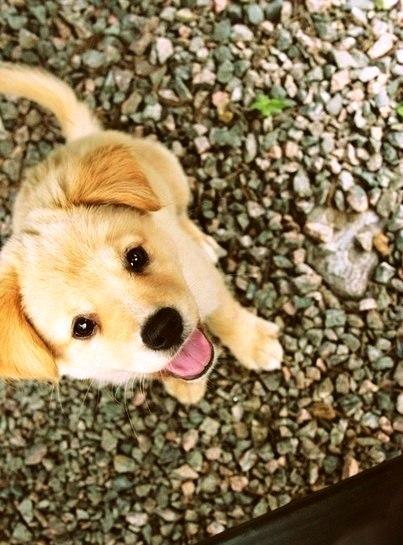 Собака - очень необычное создание