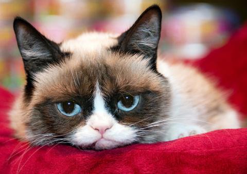 Животные доходы: как зарабатывают в интернете на котах