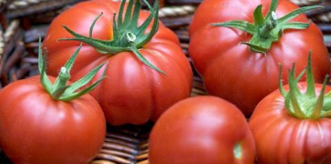 Новинки семян овощей