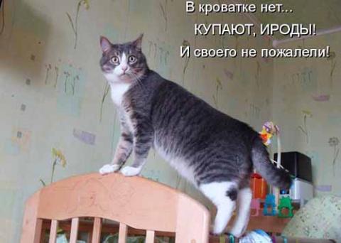 А для мышей мы кота привезли...