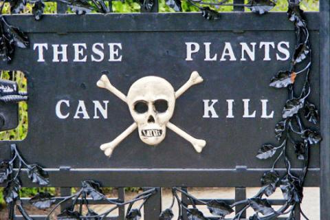 Самые опасные растения России