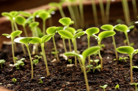 Необычный способ выращивания растений на магнитах