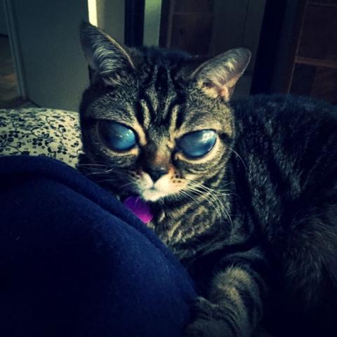 Кошка-пришелец — новая звезда интернета