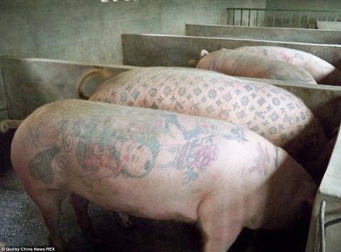 Искусство или мучение: Татуированные свиньи на арт-ферме бельгийского художника