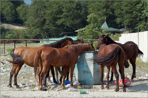 Мусорские кони